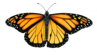 On Not Writing and Monarch Butterflies