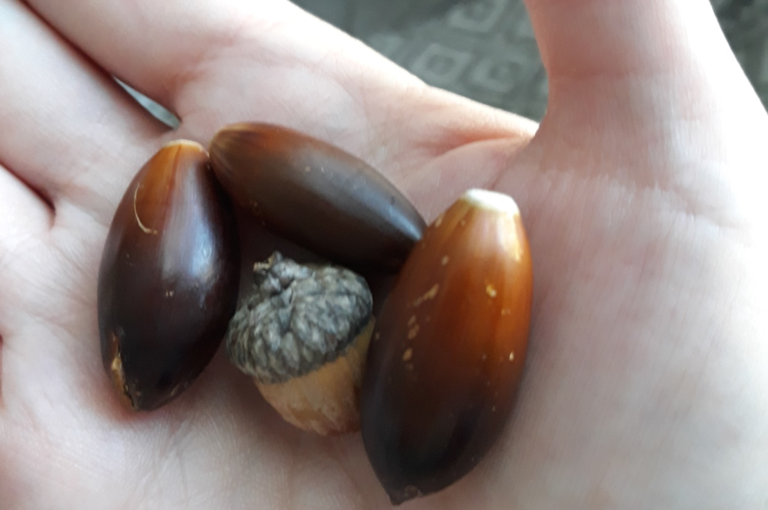 On Acorns and Tornadoes